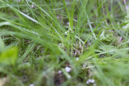 depth of field: Background of Green Grass Growing - Shallow depth of field.