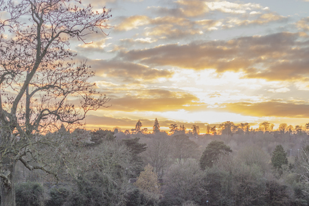 Stunning winter warm sunny sunset with a yellow tint through the branches of trees in the forest in England. Rays of lights coming from the sky pierce through the clouds and the branches.