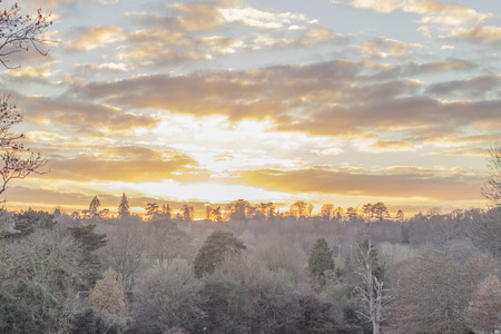pierce: Stunning winter warm sunny sunset with a yellow tint through the branches of trees in the forest in England. Rays of lights coming from the sky pierce through the clouds and the branches.