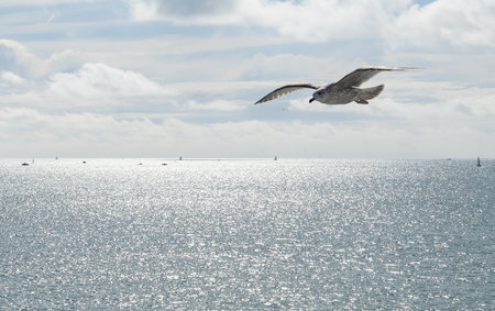A sea gull flying over a blue sky on a sunny day Stock Photo