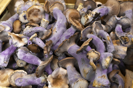 A wooden box full of purple mushrooms.