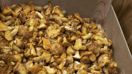 A wooden box full of yellow mushrooms