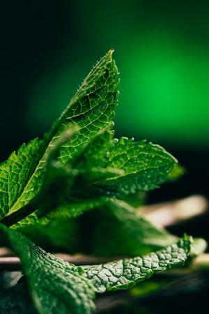 fresh mint leaves on the dark green blurry background.