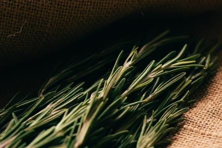 sacking: bundle of sprigs rosemary on a light background sacking. Stock Photo