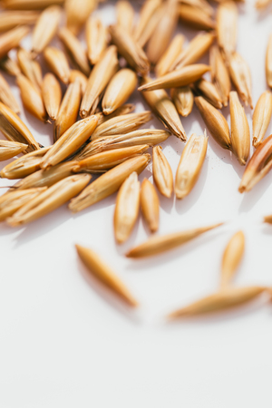grains of oats on a white background.