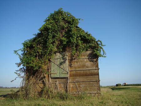 maisonette: cottage