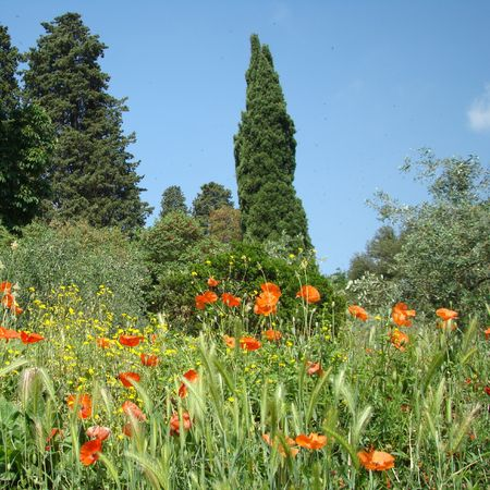 tuscan scenery Stock Photo - 5318266