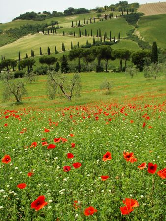 orcia:    Tuscan scenery, La Foce in The Val d Orcia, UNESCO World Heritage site