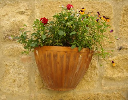 roses and  pansies in pot on wall Stock Photo - 5318327