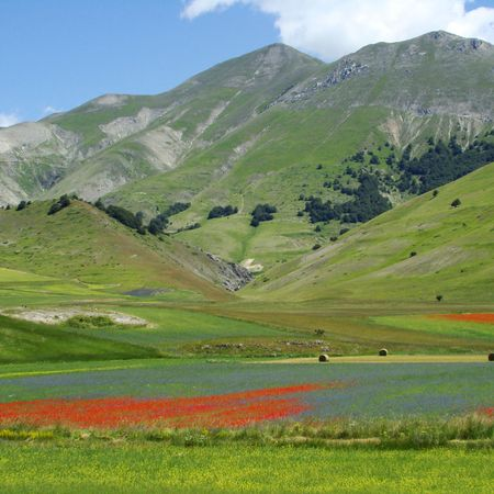 montane: Flowering meadows of Piano Grande in central Italy                                Stock Photo