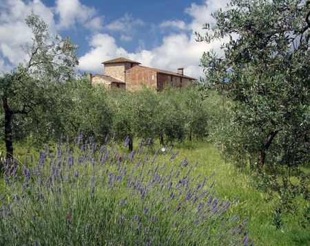 idyll:     tuscan idyll