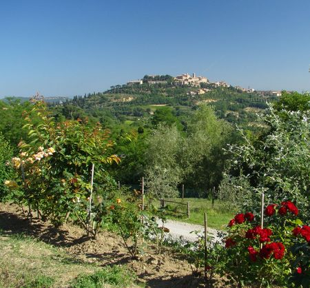 montepulciano:         Montepulciano- hill town in Tuscany
