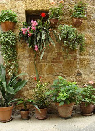 flowery wall of house in beautiful narrow italian street                                photo