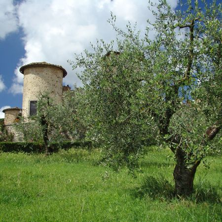 idyll:    italian idyll, scenery in tuscan countryside                                Stock Photo