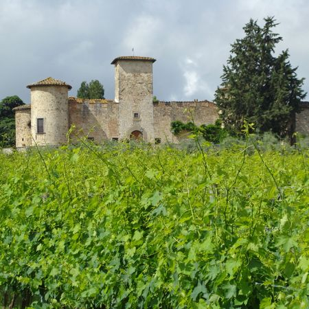 beautiful vineyard in spring and italian castle, Tuscany                                photo