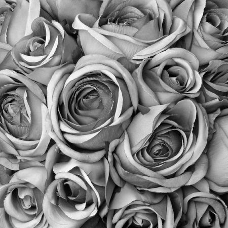 hankering: Background with roses in black and white