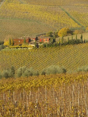 beautiful tuscan scenery                               photo