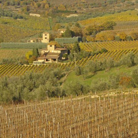 vineyards in famous chianti region, Tuscany                                photo