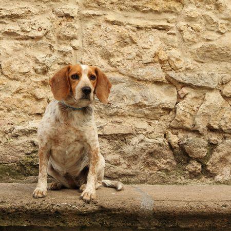 dog isolated on stony vintage wall Stock Photo - 7857300