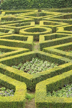 geometric pattern of green hedge flowerbed in formal garden in Florence, Italy