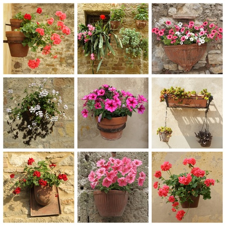 living idyll: collage of flowerpots with different flowers, Tuscany
