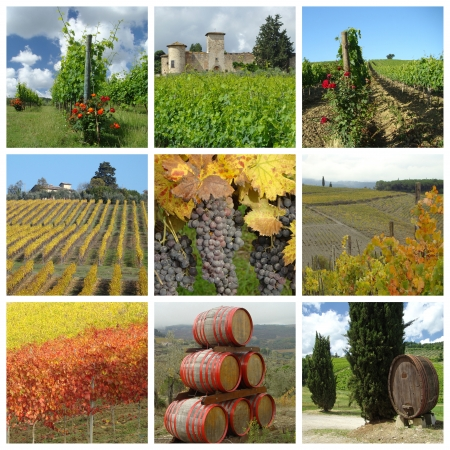 the tuscan: wine agriculture collage, Chianti in Tuscany, Italy Stock Photo