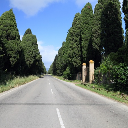 famous antique tuscan cypresses alley, Bolgheri, Tuscany, Italy  photo