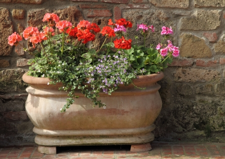 geranium color: flowers in terracotta vintage pot, Tuscany