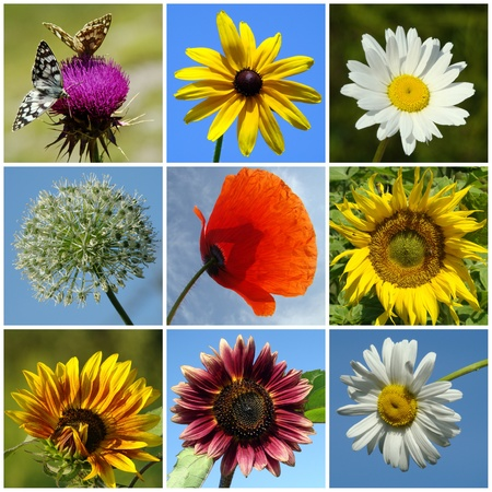 collage of colorful  rural flowers photo