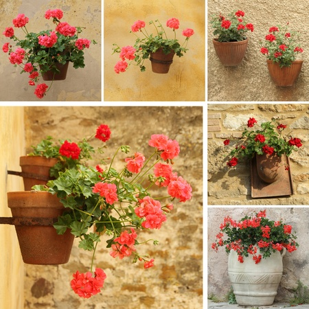 geranium: collage with geranium flowers in planters, Tuscany  Stock Photo