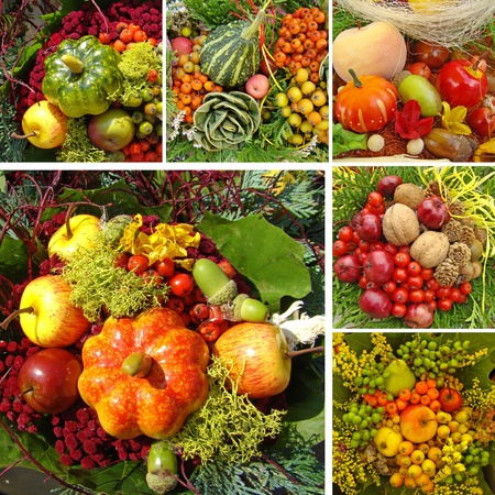 harvest collage  photo