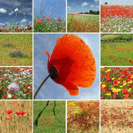 mix with poppies photo