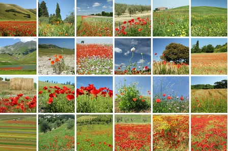 scenery with red poppies collage, Italy Stock Photo - 10454823