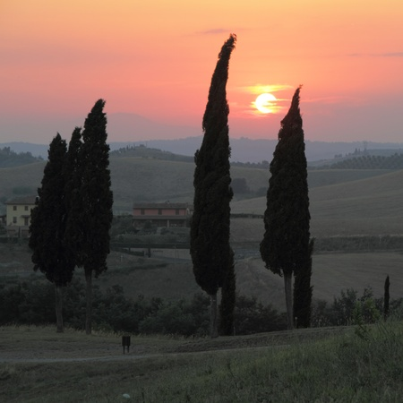 sunset over tuscan cypresses, Italy photo