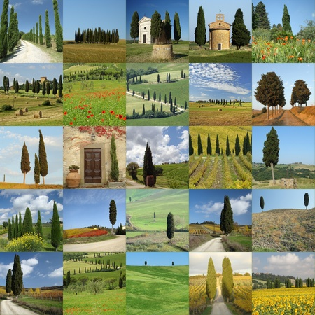 toscana: collage with cypresses in Tuscany, Italy Stock Photo