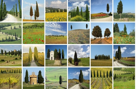 collage with italian cypresses in tuscan landscape photo