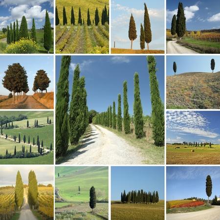 collage with mediterranean cypresses, Italia photo