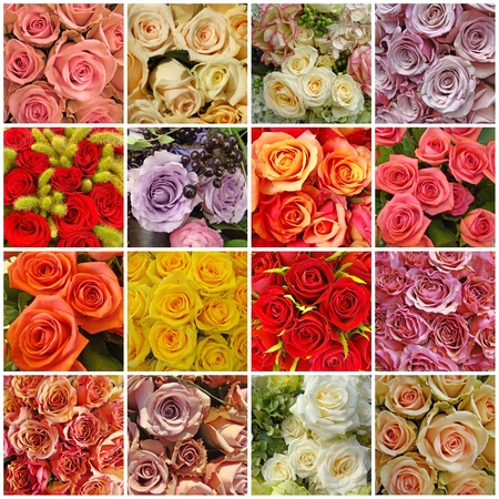 collage with roses photo