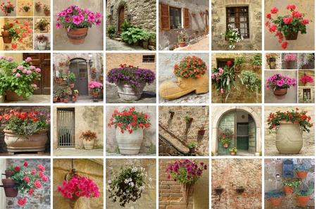 geranium: gardening collage