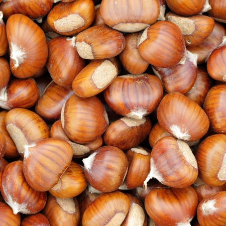 marron: Sweet chestnuts - marron - as background