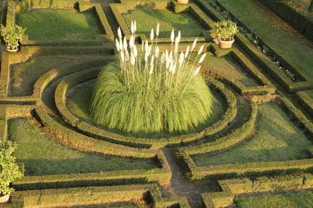 pampas: ornamental pampas grass in renaissance formal garden, Italy