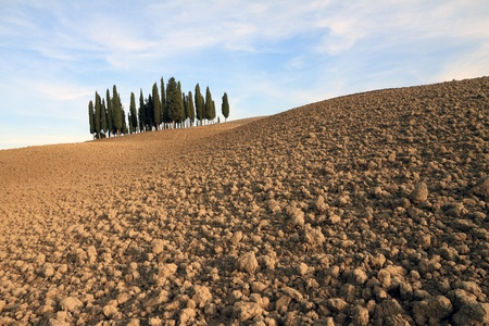 famous group  of mediterranean  cypresses, between San Quirico d Orcia and Montalcino in  Tuscany, Italy Stock Photo - 11222256