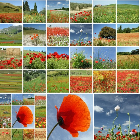 meadow in spring collage photo