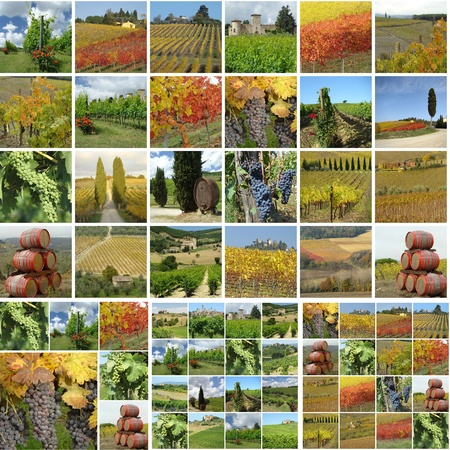collage with italian vineyards in spring, summer and autumn photo