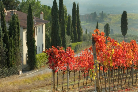 farmhouse in tuscan scenery with cypresses and red vineyards, Italy