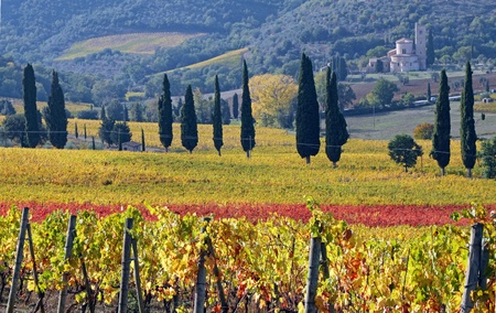 antimo: fantastic landscape of tuscan vineyards in autumn, at horizon St. Antimo Abbey , close to Montalcino  in Tuscany, Italy, Europe Stock Photo