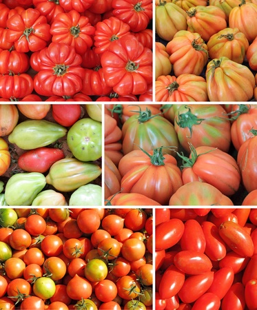 assorted tomato collage photo