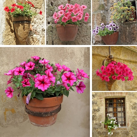 collage with flowerpot with flowering  petunia, Italy photo