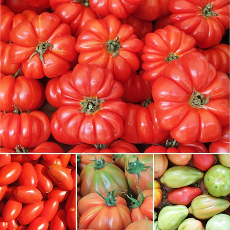 tomato collage photo