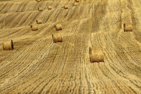 rolling bales on golden fields , Emilia – Romagna, Italy, Europe photo